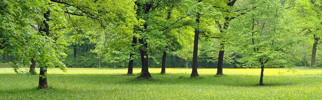 parks-70567_640